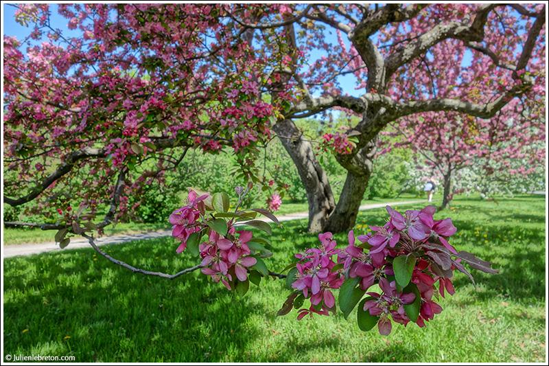Le Quebec Montreal Jardin Botanique