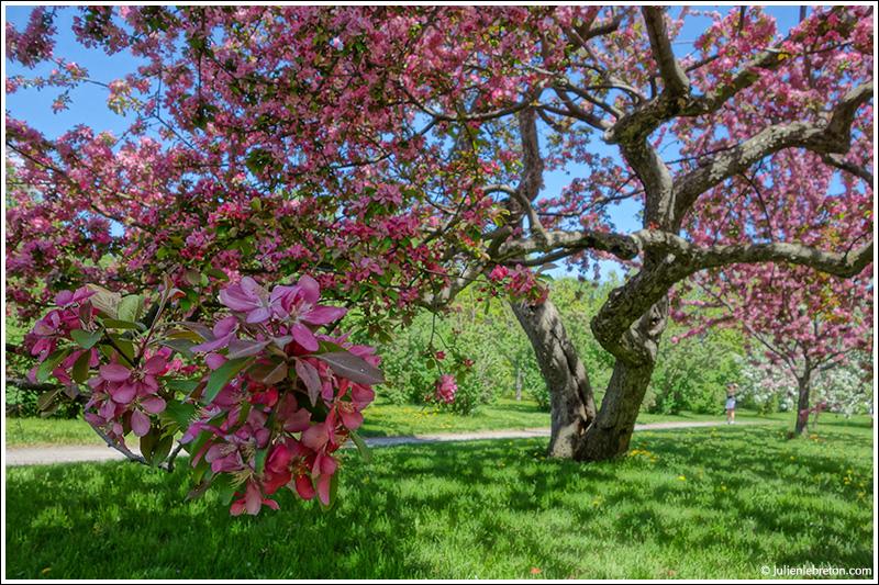 Le qu bec montr al jardin botanique for Jardin quebec